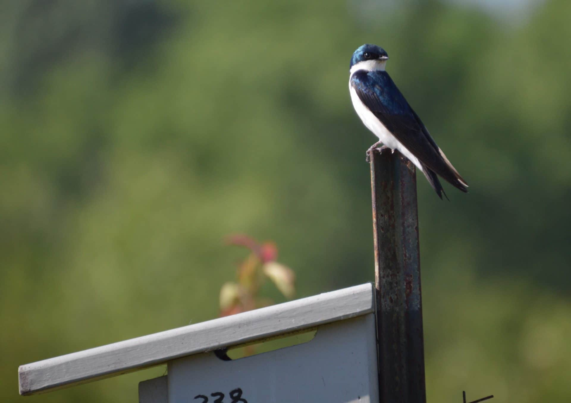 Bird on fence at Campbell Lake Preserve